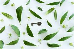 Взгляд сверху красивых свежих листьев зеленого цвета и старого ключа Стоковая Фотография RF