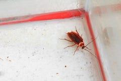 Взгляд сверху мертвого таракана постное стоковое фото