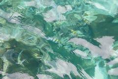 Взгляд сверху моря и рыб Стоковое Фото