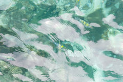 Взгляд сверху моря и рыб Стоковое фото RF