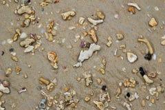Взгляд сверху на пляже с камнями и seashells на песке Стоковые Фото
