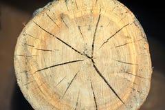 Взгляд сверху пня дерева изолированного на отказах предпосылки радиальных Стоковое фото RF