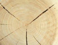 Взгляд сверху пня дерева изолированного на отказах предпосылки радиальных Стоковые Фото