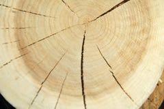 Взгляд сверху пня дерева изолированного на отказах предпосылки радиальных Стоковая Фотография