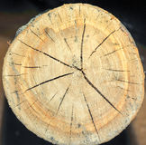 Взгляд сверху пня дерева изолированного на отказах предпосылки радиальных Стоковое Изображение RF