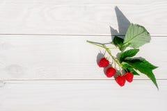 Взгляд сверху поленик ягод Стоковые Изображения