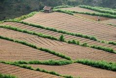 Взгляд сверху поля земледелия Стоковая Фотография RF