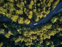 Взгляд сверху пути через деревья Взгляд от воздушного шара Взгляд дороги сверху принятый quadrocopter Стоковое фото RF