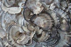 Взгляд сверху раздражанного гриба грибка дерева стоковое фото