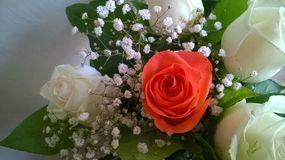 взгляд сверху роз букета Стоковое Фото