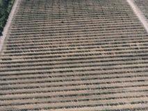 Взгляд сверху сада яблонь карлика Стоковая Фотография RF