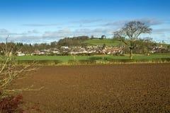 Взгляд серовато-коричневых цветов, Berwickshire, Шотландия Стоковое Изображение RF