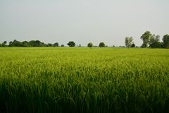 Взгляд сельской местности Стоковое фото RF