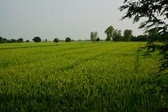 Взгляд сельской местности Стоковые Фото