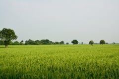 Взгляд сельской местности Стоковые Фотографии RF