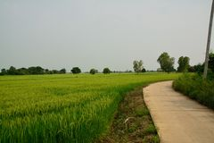 Взгляд сельской местности Стоковая Фотография RF
