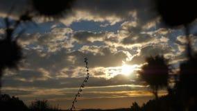 Взгляд Солнця через траву на поле на зоре сток-видео