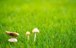 Взгляд со стороны гриба среди прерии Стоковые Изображения