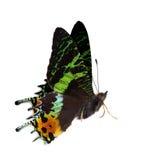 Взгляд со стороны зеленой и оранжевой бабочки Стоковые Изображения RF