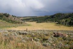Взгляд со стороны и сельскохозяйственное угодье страны с коровами на Колорадо США Стоковые Фото