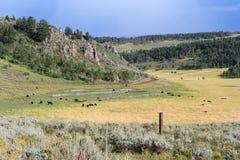 Взгляд со стороны и сельскохозяйственное угодье страны с коровами на Колорадо США Стоковые Фотографии RF