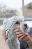 Взгляд со стороны края холить белой собаки стоковая фотография