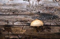 Взгляд со стороны на журнале с mushroomr Стоковые Фото