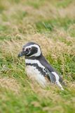 Взгляд со стороны пингвина на поле Стоковые Изображения