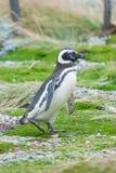 Взгляд со стороны пингвина Стоковая Фотография