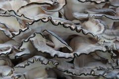 Взгляд со стороны раздражанного гриба грибка дерева стоковое изображение