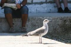 Взгляд со стороны чайки стоя на поле Стоковые Фотографии RF