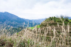 взгляд террасного холма в стране Dazhai весной Стоковые Фотографии RF