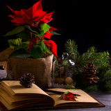 Взгляд тетради милого украшения рождества, конусов, ели Стоковые Изображения