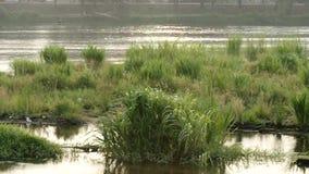 Взгляд травы и реки видеоматериал