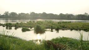 Взгляд травы и реки сток-видео