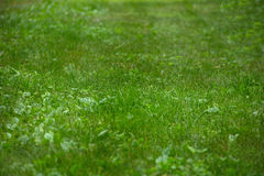 Взгляд травы с малой глубиной поля Стоковое Фото