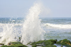 Взгляд тропического ландшафта скалистого пляжа с зеленой морской водорослью стоковая фотография