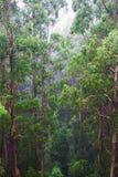 Взгляд тропического леса Стоковая Фотография