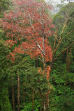 Взгляд тропического леса Стоковое Фото