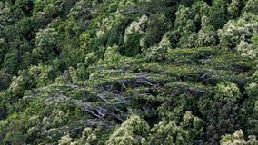 Взгляд тропки природы Trois Freres гласиса в Сейшельских островах Стоковая Фотография