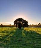 Уединённое дерево во время захода солнца Стоковые Фото