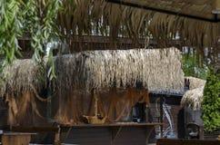 Взгляд уютного nook для релаксации лета под навесом ладони с баром, таблицей, стулом и деревянной скамьей, gradina Borisova парка Стоковые Изображения RF
