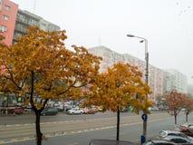 Взгляд улицы Стоковые Изображения