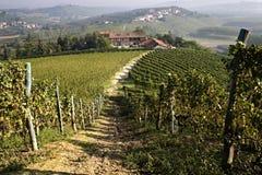 Взгляд фермы в виноградниках Стоковые Изображения RF