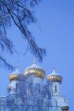 Взгляд церков через ветви стоковые изображения