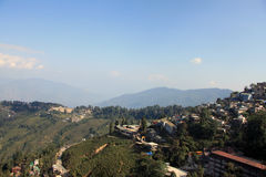 Взгляд чая fields в Darjeeling, Сиккиме, Индии Стоковое Изображение RF