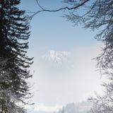 Взгляд через ветви к горному пику пряча за туманом стоковые фотографии rf