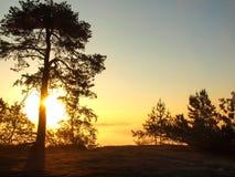Взгляд через ветви к глубокой туманной долине внутри рассвет Туманное и туманное утро на точке зрения песчаника в национальном па Стоковое Изображение RF