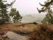 Взгляд через ветви к глубокой туманной долине внутри рассвет Туманное и туманное утро на точке зрения песчаника Стоковое Изображение RF
