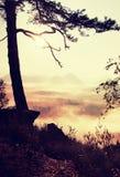 Взгляд через ветви к глубокой туманной долине внутри рассвет Туманное и туманное утро на точке зрения песчаника в национальном па Стоковое фото RF